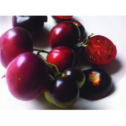 TOMATE CLACKAMAS BLUEBERRY GRAINES