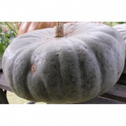 COURGE SWEET KEEPER GRAINES