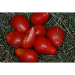 TOMATE POIRE ROUGE GRAINES
